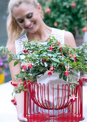 fuchsia_balkon_plant_van_het_jaar2