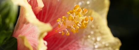 20140-_hibiscus_3