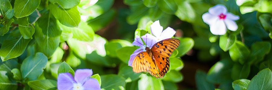vlinders2